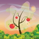 An apple tree Stock Image