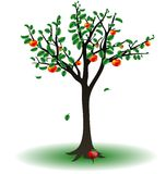 Apple tree. On a white background is the apple tree Royalty Free Illustration