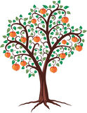 Apple tree. Design of apple tree with fruits, vector Vector Illustration