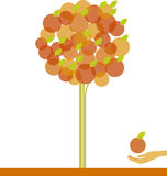 Apple tree. Vector illustration of apple tree Stock Photo