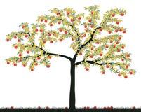 Apple tree. Editable vector illustration of a colorful apple tree Stock Image