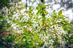 Apple-tree Royaltyfri Bild