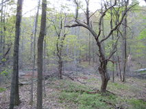 Free Apple Tree Stock Images - 44614294