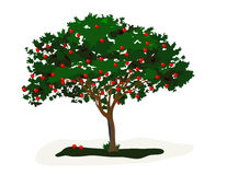 Apple Tree. Is hand drawn original artwork. The vector file is in AI-EPS8 format Stock Image