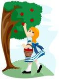 Apple Tree Stock Photo