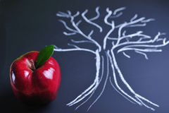 Apple and tree Stock Photo