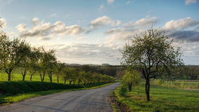 Apple tree alley Stock Images