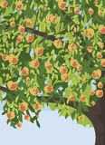 Apple tree with apples background Royalty Free Stock Image