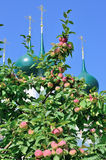 Apple tree with apples and beautiful domes of orthodox church behind it. Royalty Free Stock Photo