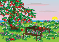Apple. Tree with apples and a field with flowers overlooking the water and the sun Royalty Free Stock Image