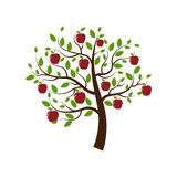 Apple. The only tree with apples on a white background Stock Images