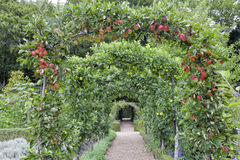 Apple tree arch in a summer english garden. Red and green apple arch above a stone walkway leading to a gate, in a summer, fruit and vegetable garden in an Royalty Free Stock Photos