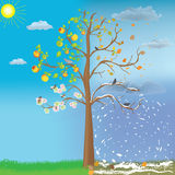 Apple tree as symbol of four seasonal changes Royalty Free Stock Photos