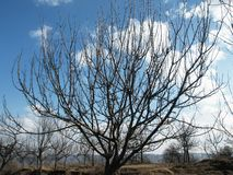 Apple tree in autumn. Apple tree and blue sky in autumn Royalty Free Stock Image