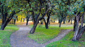 Apple tree autumn park Royalty Free Stock Photo