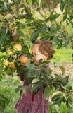 Apple tree baby Royalty Free Stock Photo