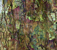 Apple tree bark. Close up of apple tree bark as a interesting background Royalty Free Stock Photography