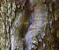 Apple tree bark Stock Photo