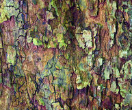 Apple tree bark. Close up of apple tree bark as a interesting background Royalty Free Stock Images