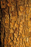 Apple tree bark texture Royalty Free Stock Photography