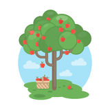 apple tree. Stock Photography