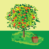 Apple tree. In a beautiful background Royalty Free Stock Photography