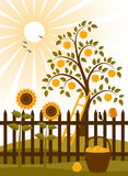 Apple tree behind fence. Illustrated apple tree and picket fence with sunflowers Stock Image
