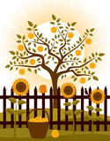 Apple tree behind fence. Apple tree and picket fence with sunflowers Stock Photo
