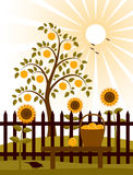 Apple tree behind fence. Apple tree and picket fence with sunflowers and basket of apples on bench Stock Image