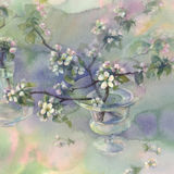 Apple tree bloom watercolor Stock Photography