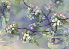 Apple tree bloom watercolor Stock Photos