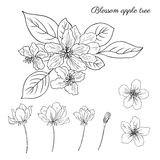 Apple tree blossom flower, bud, leaves, branch vector engraving Royalty Free Stock Photos