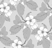 Apple tree blossom. Seamless pattern with blossom branch Royalty Free Stock Images