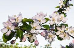 Flowering garden in spring moods royalty free stock photo