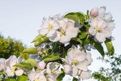 Flowering garden in spring moods stock photos