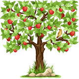 Apple tree. Cartoon apple tree isolated on white background royalty free illustration