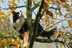 Apple tree and cat in autumn Stock Images
