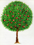 Apple tree drawing. Crayon (colored pencil) drawing of an apple tree with red apples Stock Photo