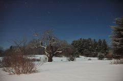 Apple tree in field at night. Snow covered apple tree in field at night during winter Royalty Free Stock Photos