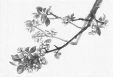 Apple tree flowering ink painting royalty free illustration