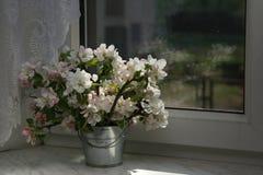 Free Apple-tree Flowers Stock Photo - 2449730