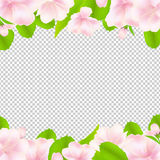 Apple Tree Flowers With Frame Royalty Free Stock Image