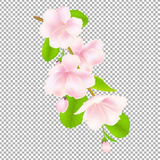 Apple Tree Flowers Stock Photos