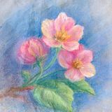 Apple tree flowers - soft pastel drawing. Royalty Free Stock Images