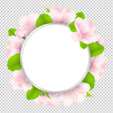 Apple Tree Flowers With Speech Bubble Royalty Free Stock Image