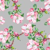 Branch Flowers Apple. Handiwork Watercolor Seamless Pattern on a Blue Background. Apple  Tree Flowers Watercolor Floral Seamless Pattern  Background Branch Royalty Free Stock Images