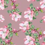 Branch Flowers Apple. Handiwork Watercolor Seamless Pattern on a Violet Background. Apple  Tree Flowers Watercolor Floral Seamless Pattern  Background Branch Stock Photos