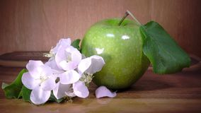 Apple tree flowers white and crimson with leaves and green ripe apple.  stock video