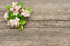Apple tree flowers on wooden background Royalty Free Stock Photos