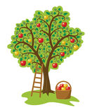 Apple tree with fruits, basket and ladder, vector  Royalty Free Stock Photo